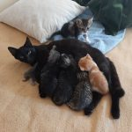 Mom and Kitts - including two foster kitts